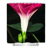 Morning Glory Stand Up Shower Curtain