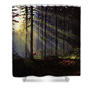 Morning Glow In The Forest Shower Curtain