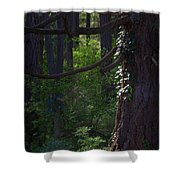 Morning In The Pacific Northwest Shower Curtain