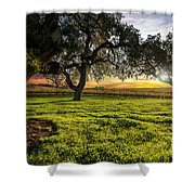 Morning In Wine Country Shower Curtain