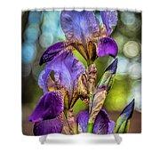 Morning Iris Shower Curtain