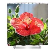 Morning Light Hibiscus Shower Curtain