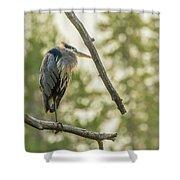 Morning Light On Great Blue Heron Shower Curtain