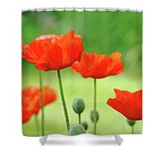 Morning Light Poppies Shower Curtain