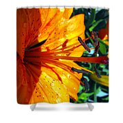 Morning Lily Shower Curtain