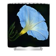 Morning Magic Shower Curtain