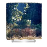 Morning Marsh Sunshine Shower Curtain