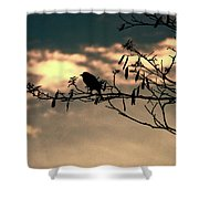 Morning Melody  Shower Curtain