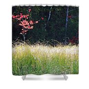 Morning Melody On Hopkins Stream Shower Curtain