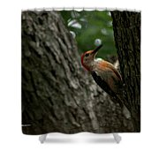 Morning Milling Shower Curtain
