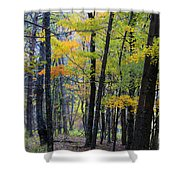 Morning Mist On The Path Shower Curtain