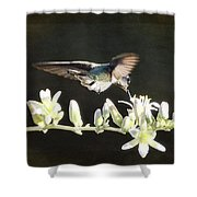 Morning Nectar Flyby  Shower Curtain