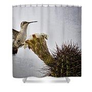 Morning Nectar  Shower Curtain