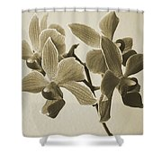 Morning Orchid Shower Curtain