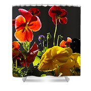 Morning Pansy's  Shower Curtain