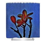 Morning Plumeria Shower Curtain