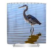 Morning Reflections Of A Great Blue Heron Shower Curtain