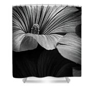 Morning Rose Mallow Shower Curtain