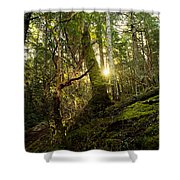 Morning Stroll In The Forest Shower Curtain