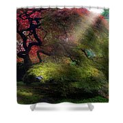 Morning Sun Rays On Old Japanese Maple Tree In Fall Shower Curtain
