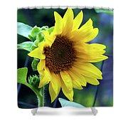 Morning Sunflower Shower Curtain