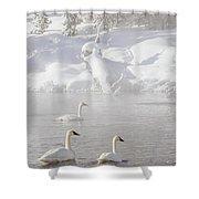 Morning Swan Trio  7845  Shower Curtain