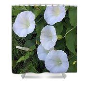 Morning Trumpets Shower Curtain