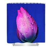 Morning Tulip  Shower Curtain