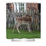 Morning Visitor Shower Curtain