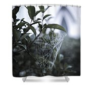 Morning Web With Dew Shower Curtain