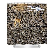 Morning. White-tailed Deer Shower Curtain