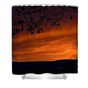 Morning's Glory Shower Curtain