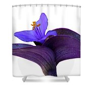 Moses In The Bullrushes Shower Curtain