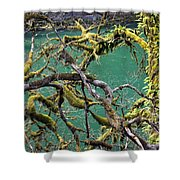 Moss And Trees Shower Curtain