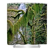 Moss At Munson Creek Shower Curtain