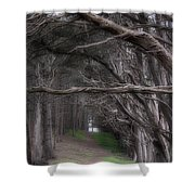 Moss Beach Trees 4191 Shower Curtain