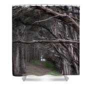Moss Beach Trees 4191 Shower Curtain