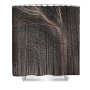 Moss Beach Trees Shower Curtain