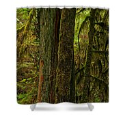 Moss Covered Giant Shower Curtain