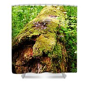 Moss Covered Log 3 Shower Curtain