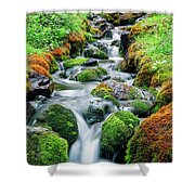 Moss Covered Stream Shower Curtain