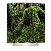 Moss Covered Tree Stump Shower Curtain