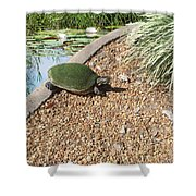 Moss Covered Turtle Shower Curtain