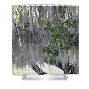 Moss Draped Tree Shower Curtain