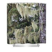 Moss On Pine Shower Curtain