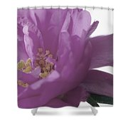Moss Rose IIi Shower Curtain