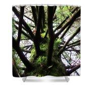 Moss Tree Shower Curtain