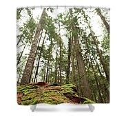 Moss Under The Cedars Shower Curtain