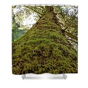 Moss Up A Tree  Shower Curtain