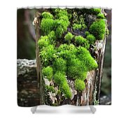 Mossy Fence - 365-321 Shower Curtain